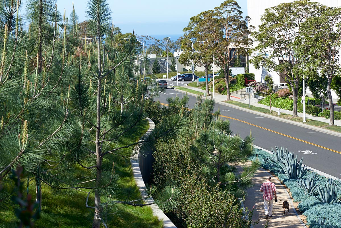 View from within the Torrey pine grove looking down to Avocado Avenue