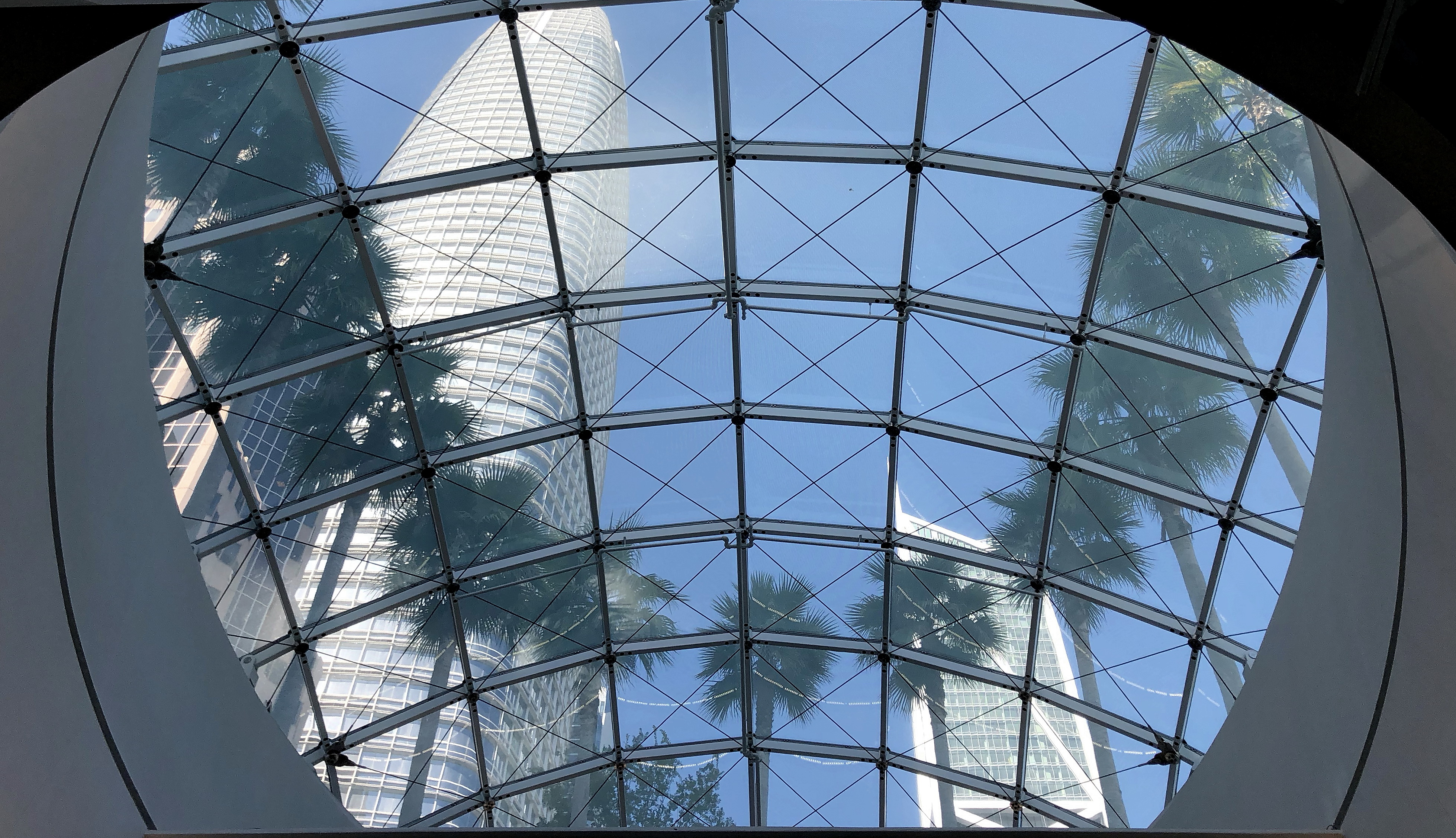 15_Skylight With Palms and Tower.jpg